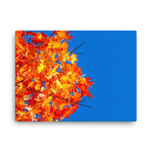 Colorful Autumn On Canvas - Original VIP Photography