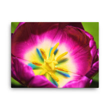 Colorful Flower on Canvas - Original VIP Photography