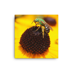 Yellow Flower / Green Bee on Canvas - VIP Wall Art and Decor