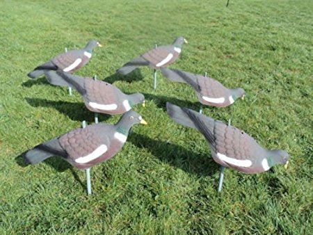 SEELAND PIGEON DECOY SHELL with STICK PEGS 24 PACK