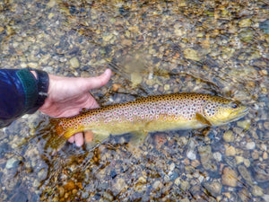 Michigan Fly Fishing Report | Nomad Anglers – Tagged