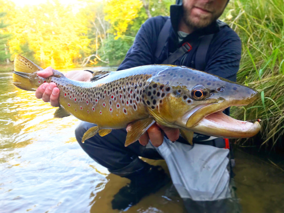 Michigan Fly Fishing Report | September 4th, 2019 | Nomad