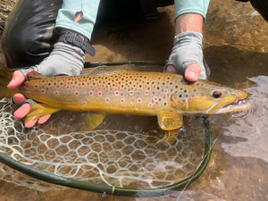 Michigan Fly Fishing Report | Nomad Anglers