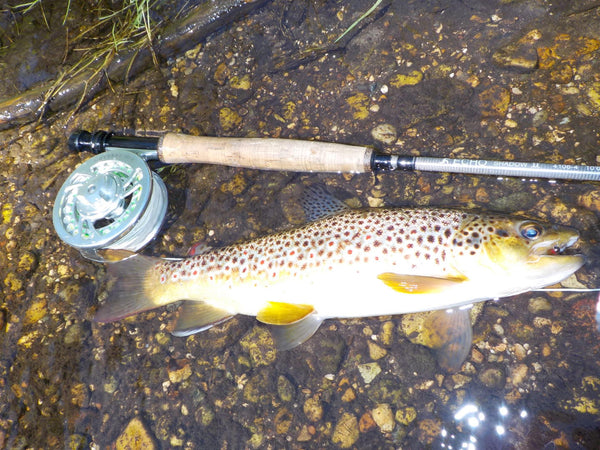 Echo Shadow Euro Nymphing Fly Rod