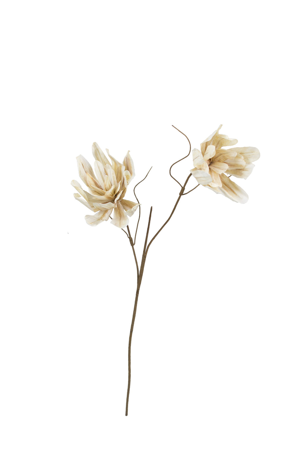 Cream/Taupe 2-Stem Botanica