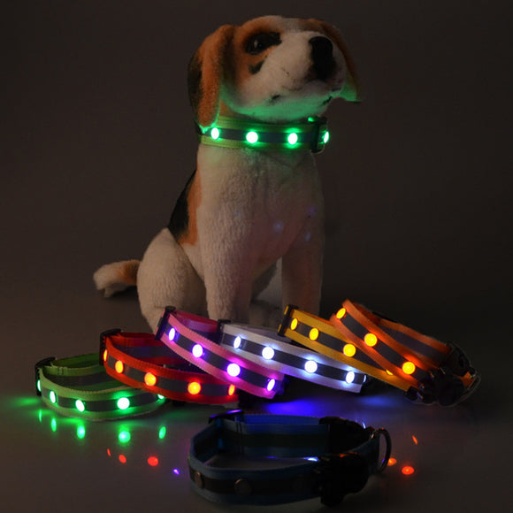 Amazing LED Light Dog Collar - Swag for My Dog