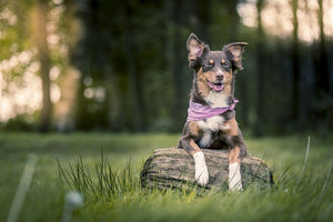 Off Leash Recall - Teaching Your Dog to Come at the Dog Park When YOU Want To Go.