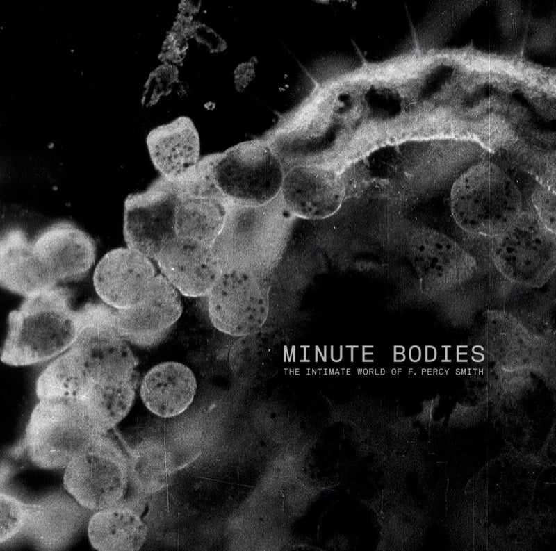 tindersticks Minute Bodies LP/DVD - Bingo Merch Official Merchandise Shop Official