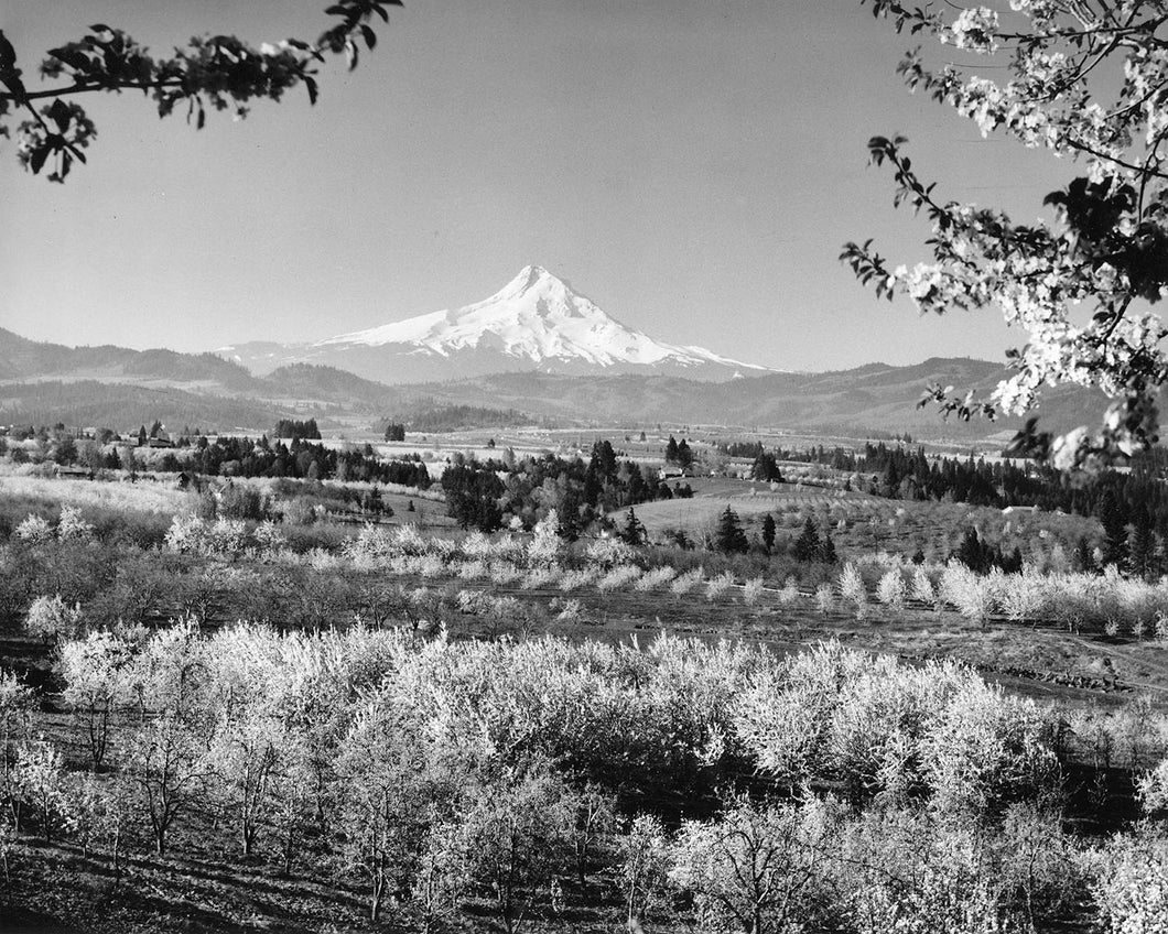 3732 Mt Hood Hood River Valley Orchards