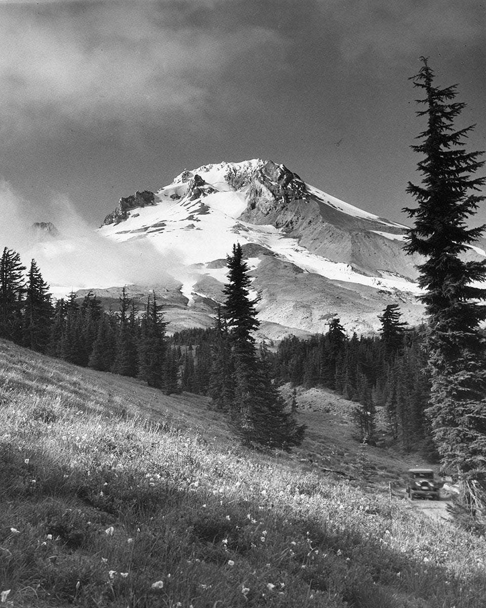 725 Mt Hood Wildflowers Timberline