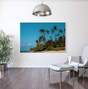 campello vision Photography Palm trees camp one