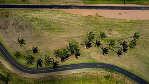 campello vision Photography Palm trees + road