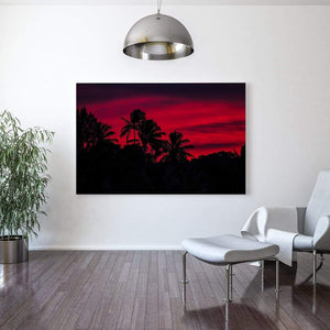 campello vision Photography Pink Palm Tree Sunset