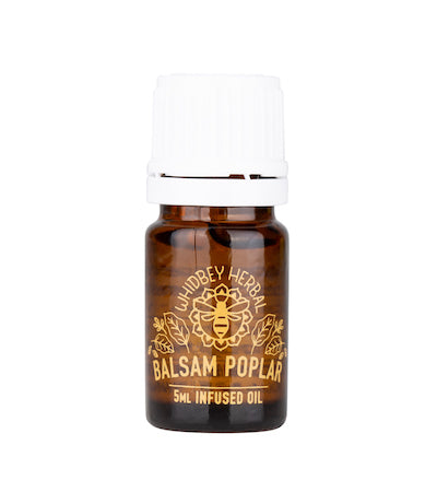 Balsam Poplar Infused Oil