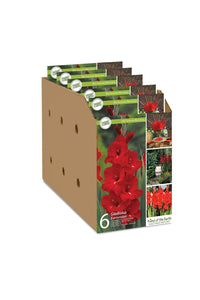Basic Flower Bulb Collection - Open top box packages Unit #14002