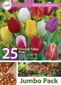 Friend of the Earth Triumph Tulips Jumbo Packs - Unit #14102