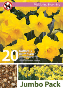 Friend of the Earth Dutch Master Daffodil Jumbo Packs - Unit #14104