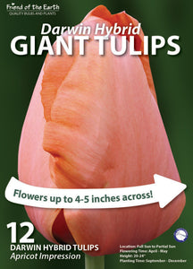 Friend of the Earth Giant Darwin Hybrid Tulips - Unit #14220