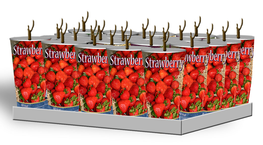 Assorted Strawberries in Plastic Containers Unit #15053