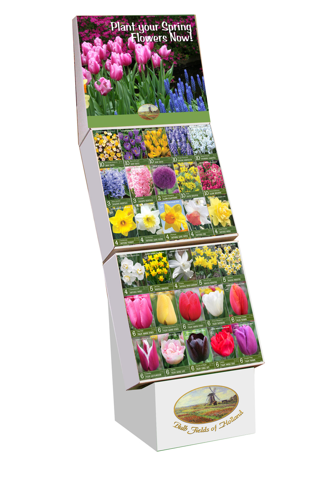 Bulb Fields of Holland Fall Bulb Display in Color Retail Impulse Boxes Unit #25100