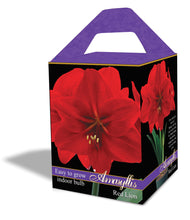 Friend of the Earth Amaryllis/Paperwhite Indoor Growing Kits - Unit #26236