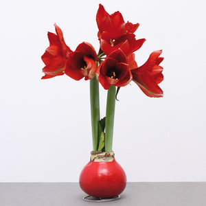 Friend of the Earth Wax Amaryllis - Unit #48015