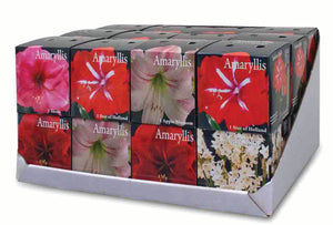 Friend of the Earth Amaryllis/Paperwhite Indoor Growing Kits - Unit #26249
