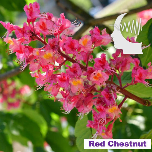 Terapia Floral - Red Chestnut