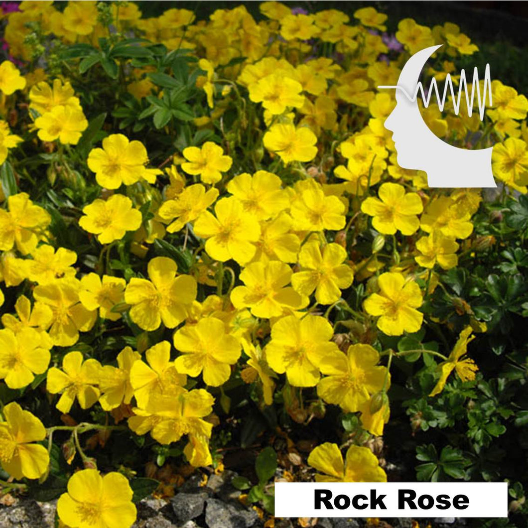 Terapia Floral - Rock Rose