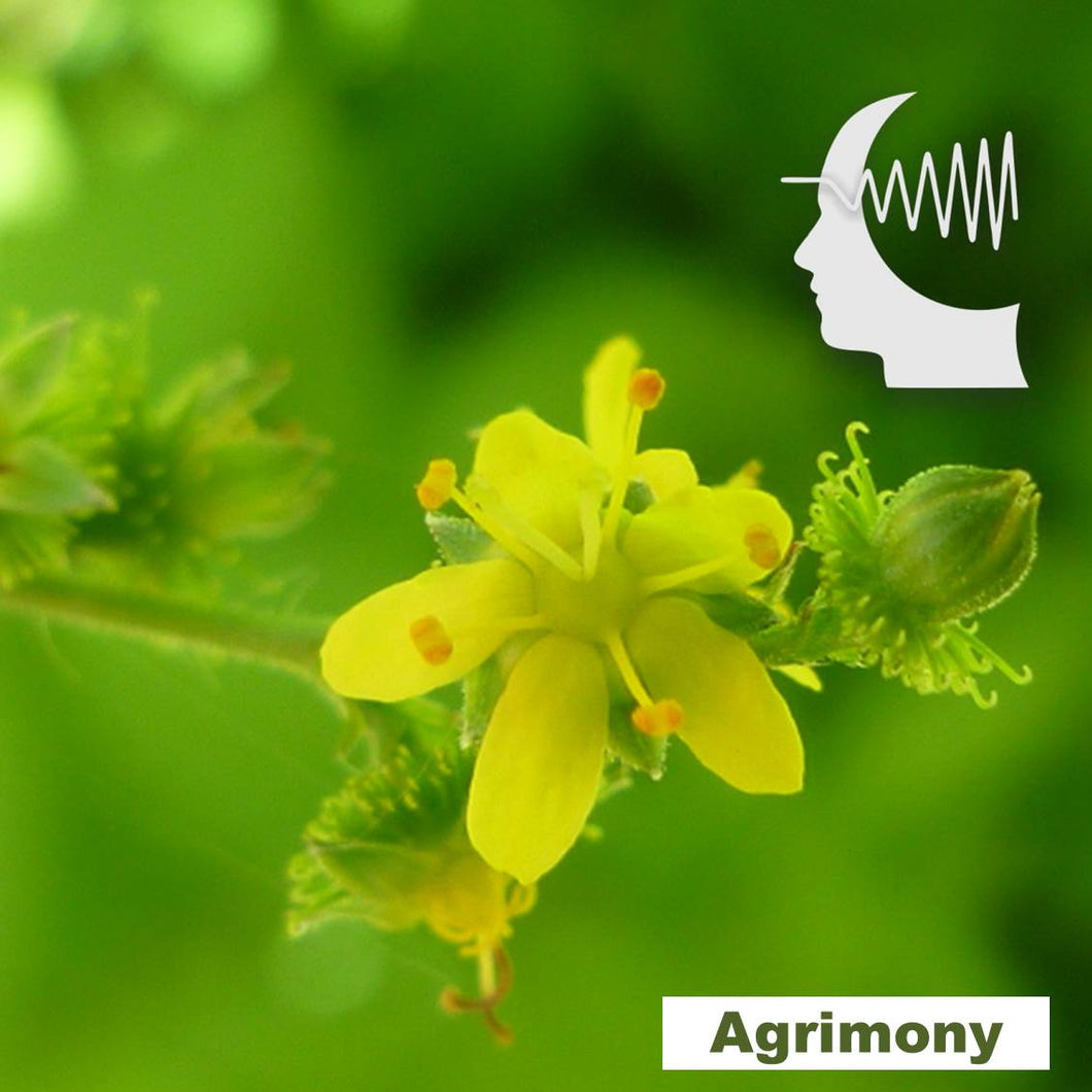 Terapia Floral - Agrimony