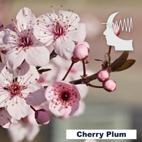 Terapia Floral - Cherry Plum