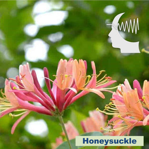 Terapia Floral - Honeysuckle