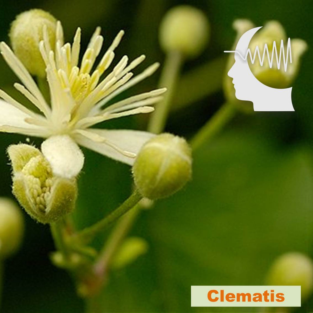 Terapia Floral - Clematis