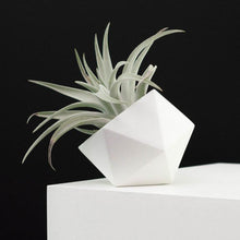 Load image into Gallery viewer, Air Plant and Geometric Vase