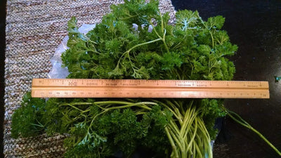Red-streaked Mizuna + Cherokee Blue Mustard: A cool parsley substitute