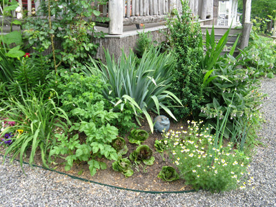Urban gardening: Small spaces, big results
