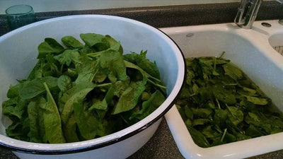 Baby your spinach leaves – they're tender