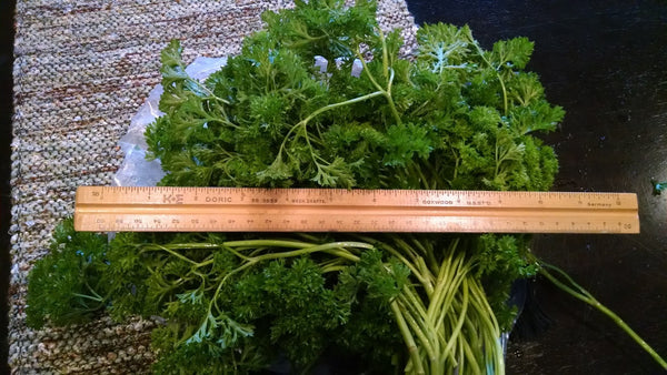 Grow Your Own Curly Parsley