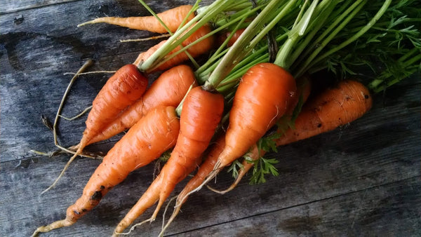 Homegrown Carrots-Grow your own- Sow True Seed
