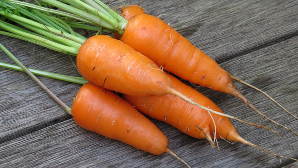 Carrots are a root crop that, in many areas, can be succession planted for sustained harvest throughout the year.
