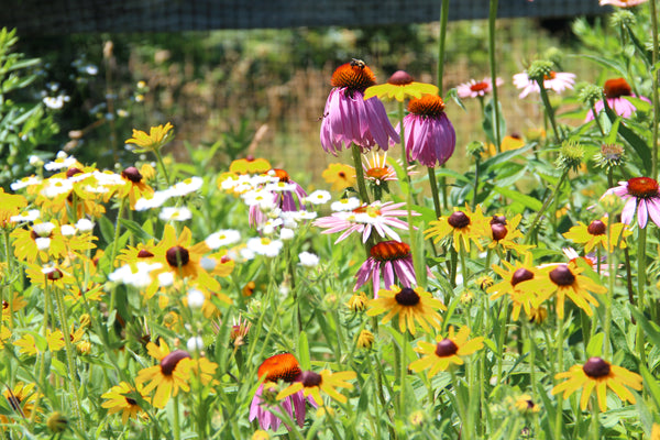 It is important not only to grow things that will benefit you in your garden but also the ecosystem around you, providing habitat for pollinators in your garden is critical to your gardens health and production.