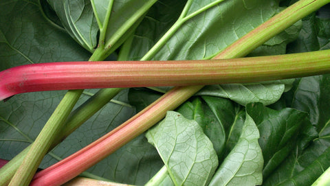 Sow True Seed growing and enjoying the rhubarb harvest