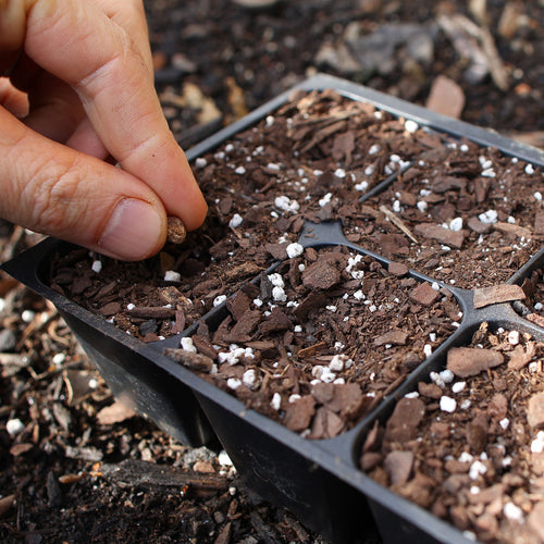 Starting Healthy Seedlings with Sow True Seed