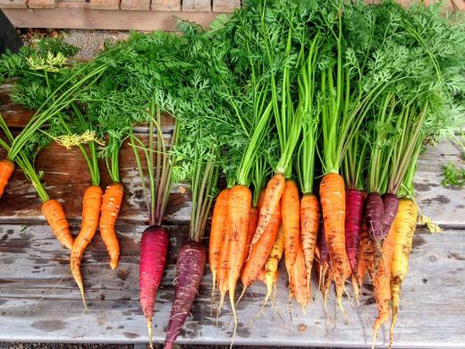 Blend of different colored carrots