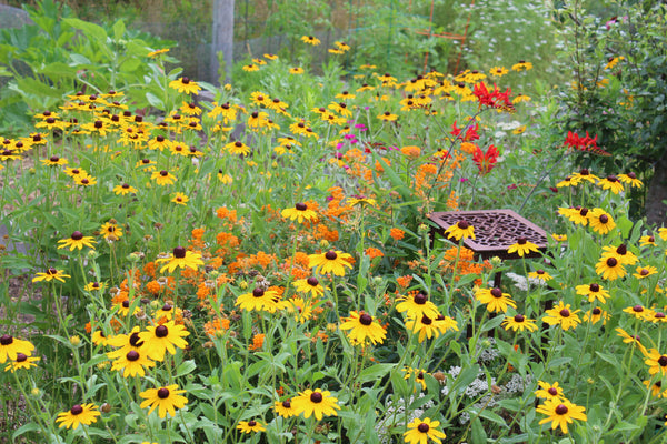 Companion planting with flowers and vegetables is great for garden production and pollinators.