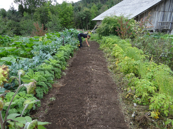 If permaculture is our guiding philosophy for living a sustainable and culturally resonant life, resilience is at its heart.