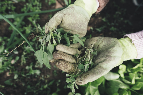 Tips from Sow True Seed on how to weed your garden!
