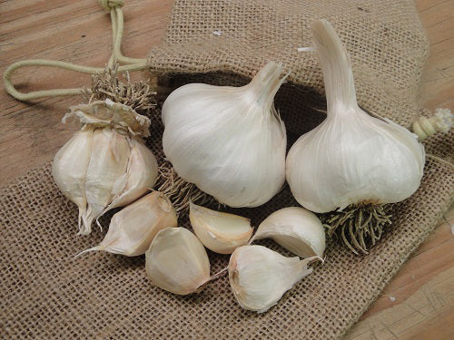 Now is the time to get your order in for garlic from Sow True Seed if you want to guarantee the organic varieties of your choice.