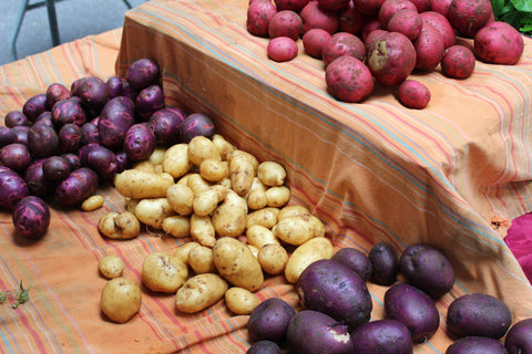 Pre-Order non GMO, USDA organic, seed potatoes from Sow True Seed Asheville NC.