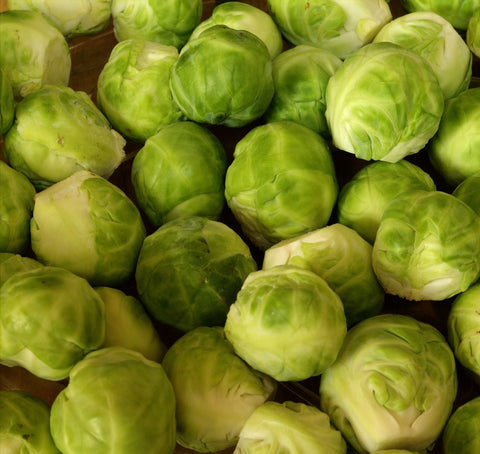 Brussels Sprouts Harvested Close Up
